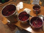 Processing the fruit - washing, rinsing, mashing